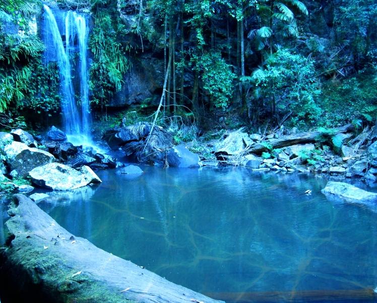 Rainforest Tamborine Mountain.jpg