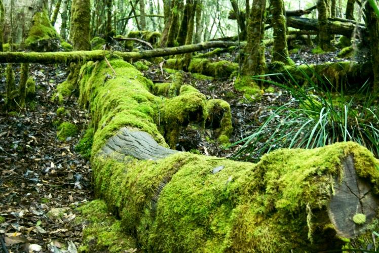 Moss Trees.jpg