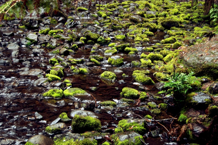 Mossy Rocks.jpg